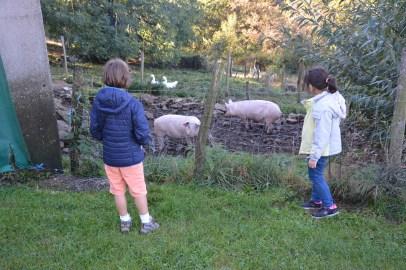 Certains enfants n'avaient jamais vu les animaux de la ferme